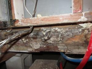 Wet wood equals termite food.